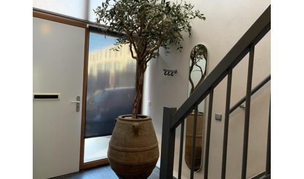 Design kunst olijfboom in de grote aarden pot