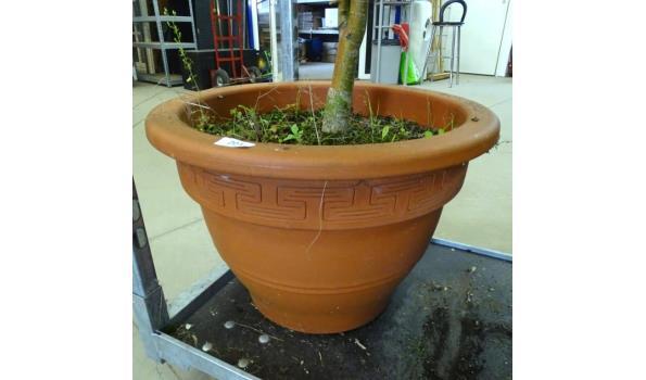 Zeer grote terracotta pot met plant