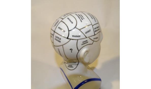 Porseleinen hoofd met phrenologie